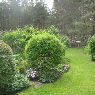 Dārzi